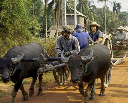 OX cart riding Siem Reap, Cambodia