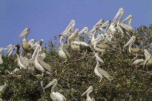 bird sanctuary at prek toal